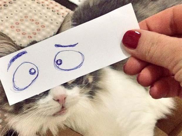 cat-montage-chat-interloqué