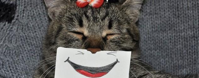 Expressions de chats, le #catmontage !