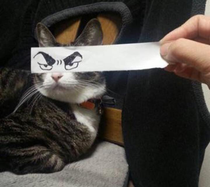 """Résultat de recherche d'images pour """"photo humour chat en colère"""""""